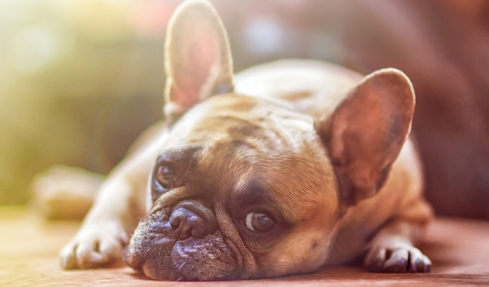 Biblical Meaning of Dog in a Dream – Interpretation and Meaning