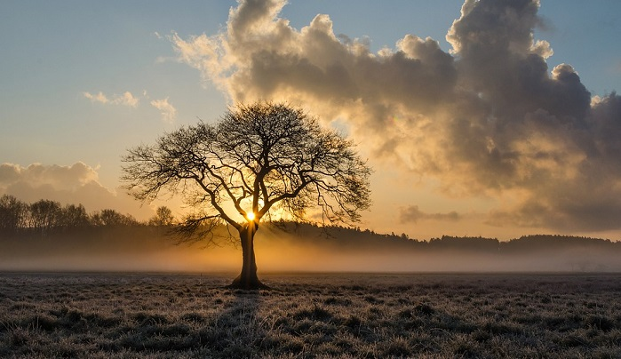 Biblical Meaning Of Trees In Dreams Interpretation And Meaning