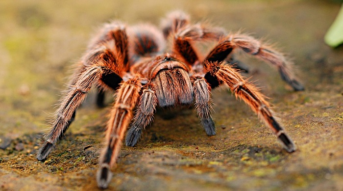 Dreaming of Spiders – Interpretation and Meaning