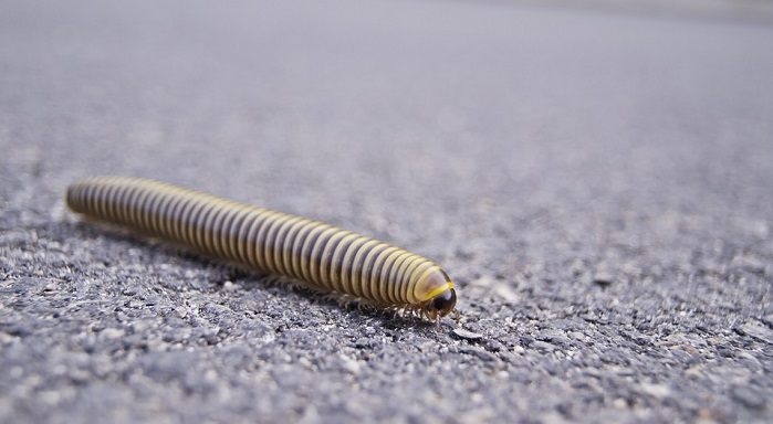 Dreams About Centipedes – Interpretation and Meaning