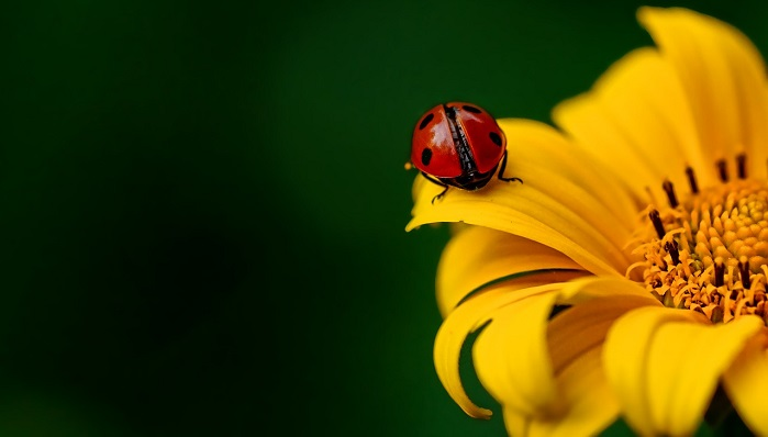 Beetle – Spirit Animal, Totem, Symbolism and Meaning