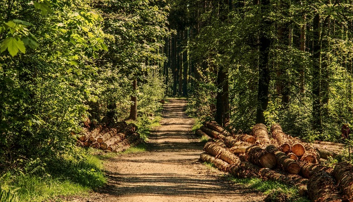 Biblical Meaning of Wood in a Dream – Interpretation and Meaning