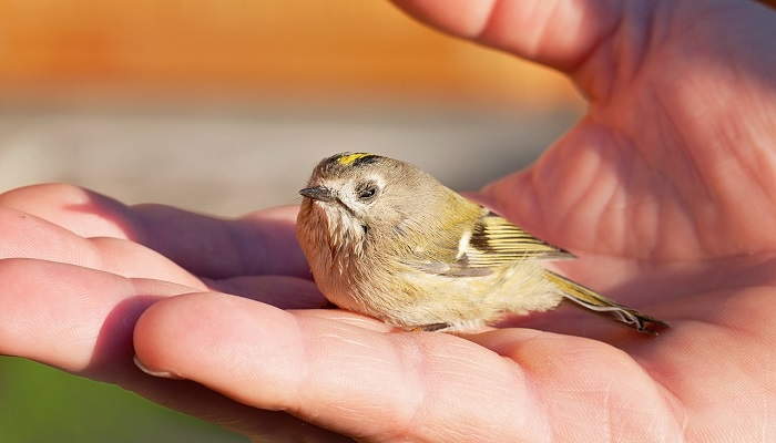 Dream About Birds Landing On You – Interpretation and Meaning