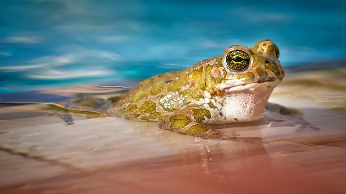 Dreams About Frogs – Interpretation and Meaning