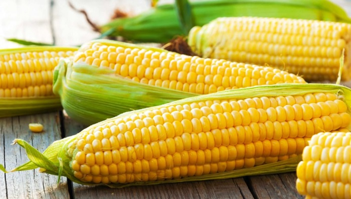 Biblical Meaning of Corn in a Dream – Interpretation and Meaning