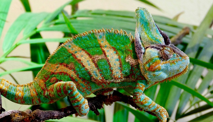 Chameleon Astrology
