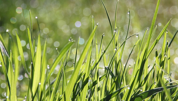 Dream About Grass – Meaning and Interpretation