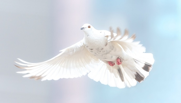Spiritual Meaning of White Dove Flying In Front of You