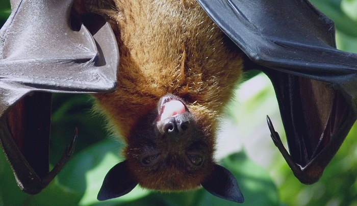 Seeing Bat in House – Meaning and Symbolism