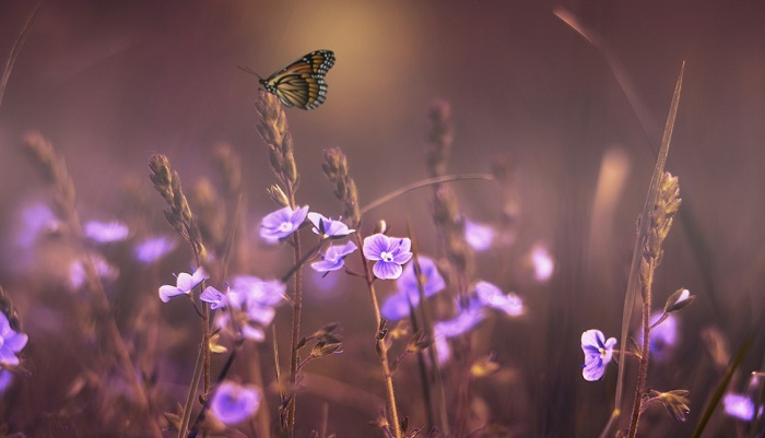 What Does It Mean When a Butterfly Crosses Your Path?