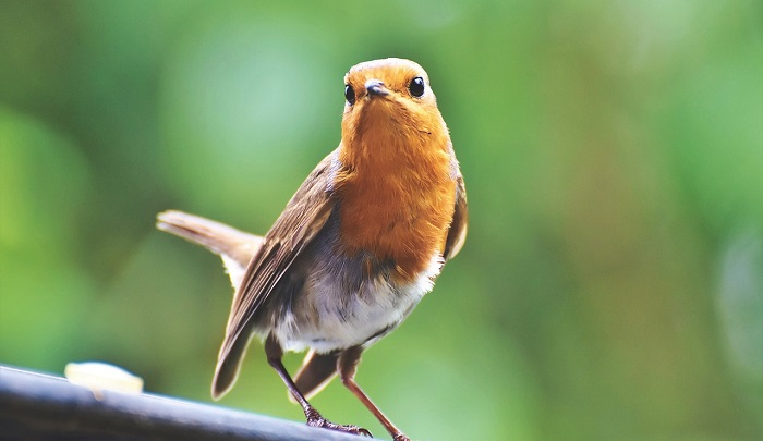 10 Birds That Bring Good Luck