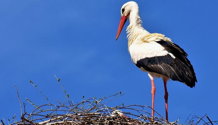 10 Birds That Bring Good Luck