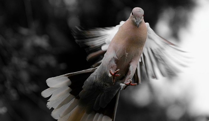 Image result for superstitions in  india birds shit