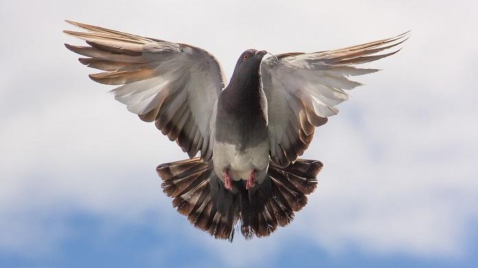Bird Poop – Good Luck, Superstition